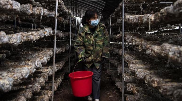 山西沁源:設施農業助增收